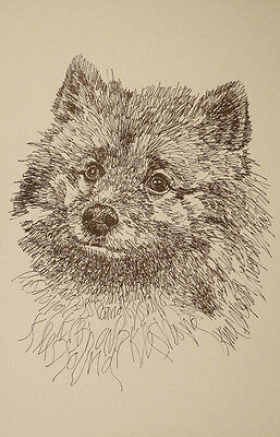 Keeshond Dog Breed Art Portrait Print #235 Kline draws your dogs name free. GIFT