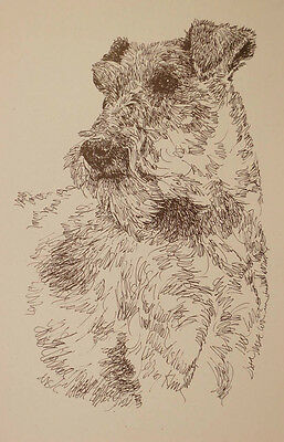 Irish Terrier Dog Art Portrait Print #236 Kline Draws dogs name free. GREAT GIFT