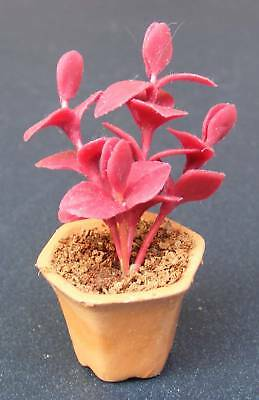 1:12 Scale Red Leaf Plant In A Pot Tumdee Dolls House Garden Accessory P43