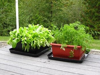 Set of 2 Flexible Raised Bed / Organic Growing System