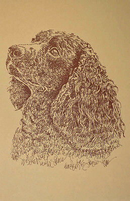 American Water Spaniel Dog Art Word Drawing 40  Kline Draws Dogs Name Free. GIFT