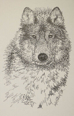 WOLF ART PRINT LITHOGRAPH #40 Signed by Kline DRAWING FROM WORDS wolves GIFT