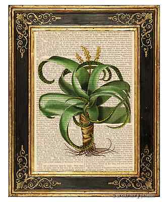 Aloe Vera Art Print on Antique Book Page Vintage Illustration Garden Plants