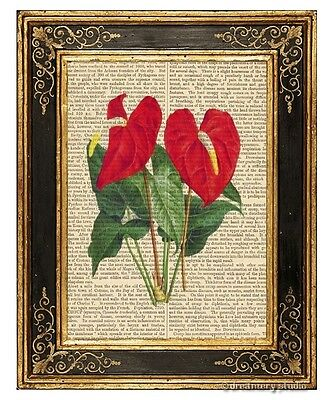 Anthurium Flamingo Flower Art Print on Antique Book Page Vintage Illustration