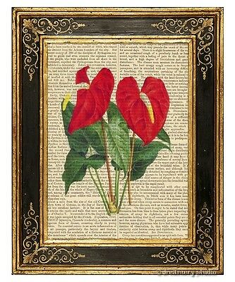 Anthurium Flamingo Flower Art Print on Vintage Book Page Home Decor Gifts