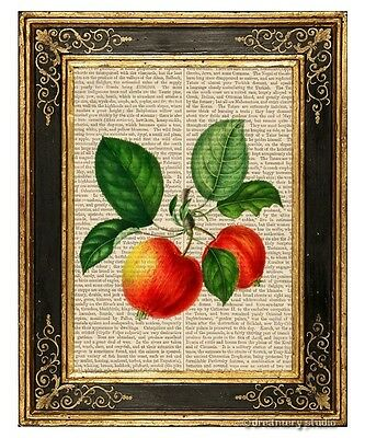 Red Apples Art Print on Vintage Book Page Garden Home Kitchen Hanging Decor Gift