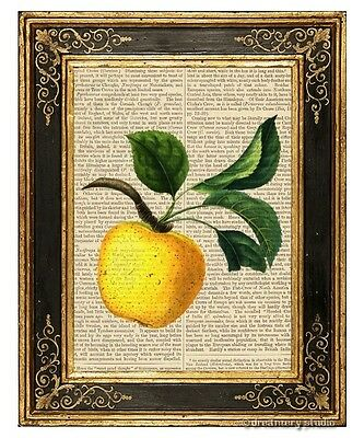 Yellow Apple Art Print on Antique Book Page Vintage Illustration Garden Fruits