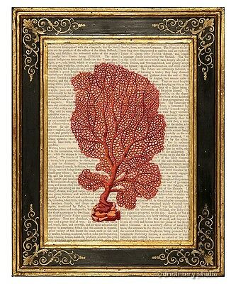 Red Sea Fan Coral Art Print on Antique Book Page Vintage Illustration Gorgonian