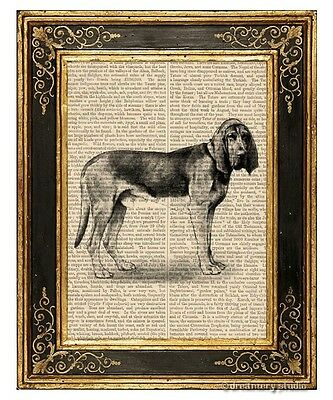 Bloodhound Dog Art Print on Antique Book Page Vintage Illustration Pet Animal