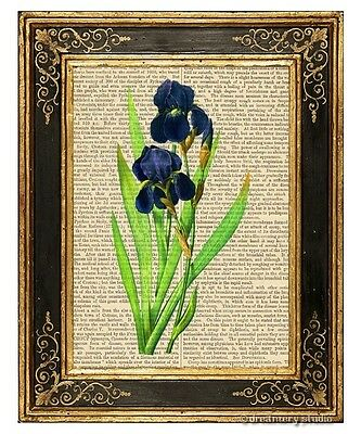 Iris Art Print on Antique Book Page Vintage Illustration Garden Flowers