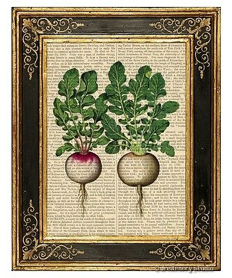 Italian Radish Art Print on Vintage Book Page Home Kitchen Hanging Decor Gifts