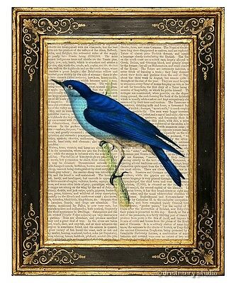 Arctic Bluebird Art Print on Antique Book Page Vintage Illustration Birds