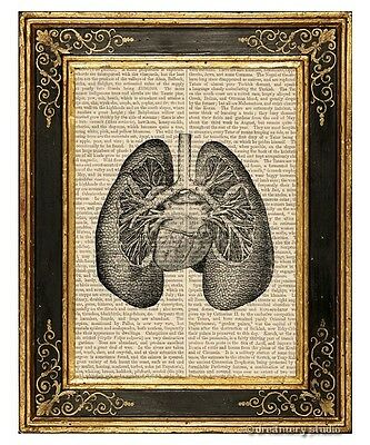 Lungs Art Print on Antique Book Page Vintage Illustration Medical Anatomy