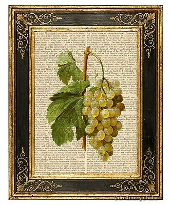 White Grapes Art Print on Antique Book Page Vintage Illustration Fruits Food