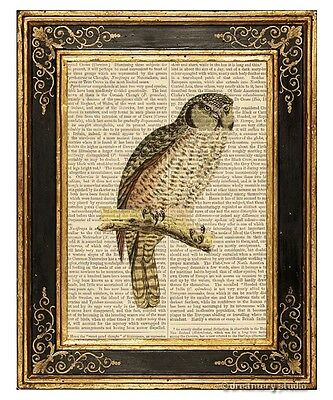 Owl #3 Art Print on Antique Book Page Vintage Illustration Nocturnal Wise Birds