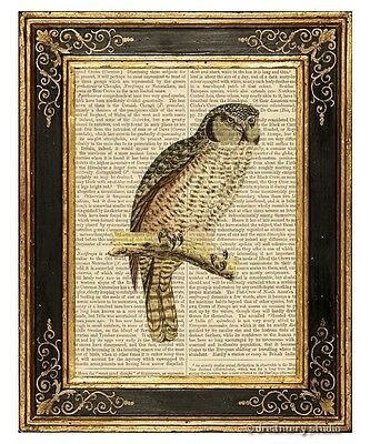 Owl #3 Art Print on Vintage Book Page Birds Home Office Wall Hanging Decor Gifts