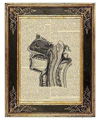 Internal Structures of Human Head 1 Art Print on Antique Book Page Medical