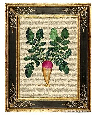 Turnip Art Print on Antique Book Page Vintage Illustration Root Vegetable Food