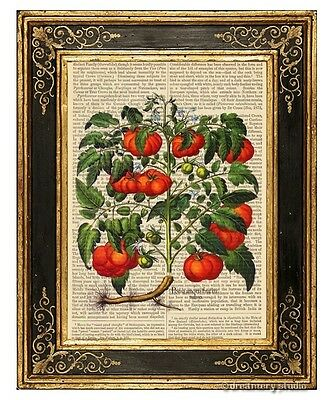 Heirloom Tomatoes Art Print on Vintage Book Page Garden Home Kitchen Decor Gifts