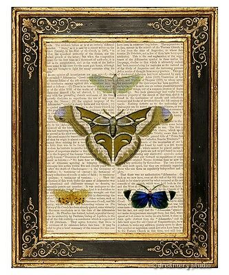 Moth Butterflies #2 Art Print on Vintage Book Page Vintage Garden Insect Decor