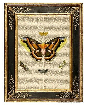 Moth Butterflies #1 Art Print on Antique Book Page Vintage Illustration Garden