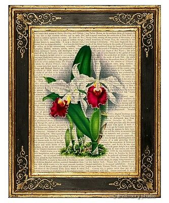 Cattleya Orchid Flower Art Print on Antique Book Page Vintage Illust Garden