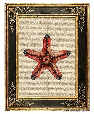 Red Starfish Art Print on Antique Book Page Vintage Illustration Sea Star Fish
