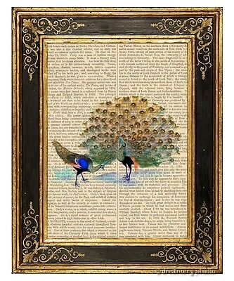 Peacock #5 Art Print on Antique Book Page Vintage Illustration Peafowl