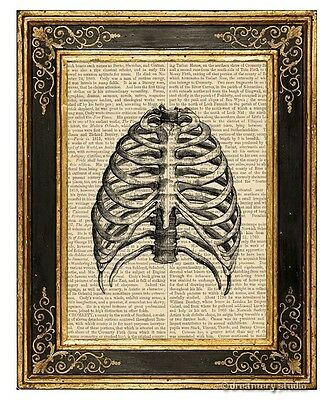 Human Rib Cage Art Print on Antique Book Page Vintage Medical Illustration