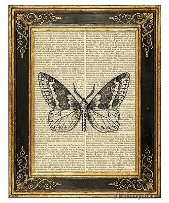 Moth #1 Art Print on Antique Book Page Vintage Illustration Nocturnal Insect