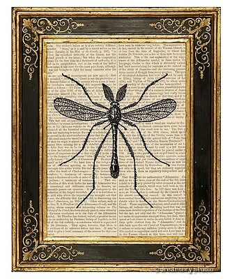 Mosquito Art Print on Vintage Book Page Insect Home Office Wall Hanging Decor