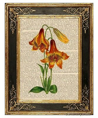 Deep Colored Canadian Lily Art Print on Antique Book Page Vintage Illustration