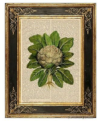 Cauliflower Art Print on Antique Book Page Vintage Illustration Vegetable Veggie