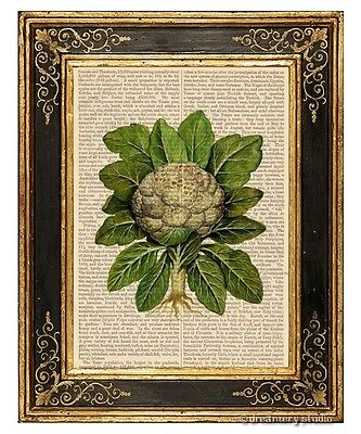 Cauliflower Art Print on Vintage Book Page Vegetable Home Kitchen Decor Gifts