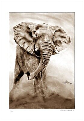 African Elephant      Drawing          Limited Edition