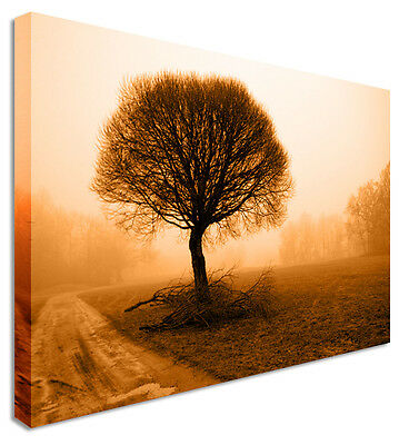 Brown Tree Floral Flower Canvas Wall Art Picture - Large+ Any Size