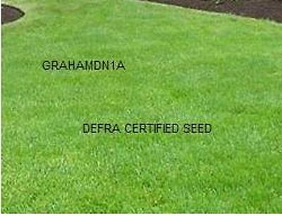 GRASS SEED MIX 50g WITH RYEGRASS HARDWAREING small area FREEPOST
