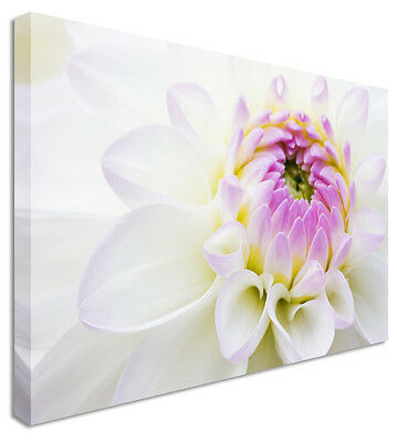 Large Floral Flower Purple & White Lilly Canvas Pictures Wall Art Prints