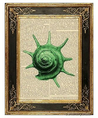 Sea Snail Shell #3 Green Art Print on Antique Book Page Vintage Illustration