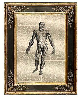 Muscular System #1 Art Print on Antique Book Page Vintage Medical Illustration