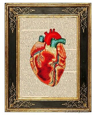 Heart #2 Art Print on Antique Book Page Vintage Illustration Medical Anatomy