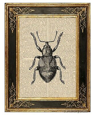 Beetle #1 Art Print on Vintage Book Page Garden Home Office Wall Hanging Decor
