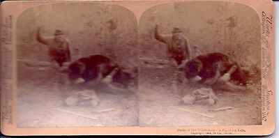 1893 Stereoview Card Perils of the Wilderness A Fight For Life ~ Fight with Bear