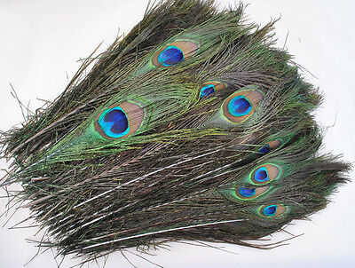 Real Peacock Tail Natural Feathers DIY Crafts Arts Hair Extensions Wholesale Lot
