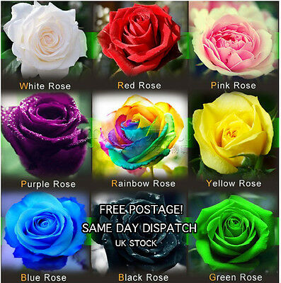 1800 MIXED Rose Seeds - very rare-- WHOLESALE - FREE POSTAGE - FAST