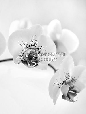 ORCHID FLOWER BLACK WHITE PHOTO ART PRINT POSTER PICTURE BMP2019B
