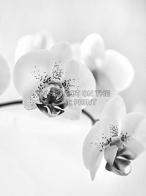 ORCHID FLOWER BLACK WHITE PHOTO ART PRINT POSTER PICTURE BMP2019A