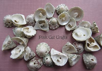 30 x NATURAL SEA SHELL BEADS GREEN & BROWN MIXED SHAPES & SIZES 1MM HOLE
