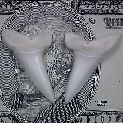 Perfect Pair of 1.61 inch odern mako shark tooth teeth (#613)