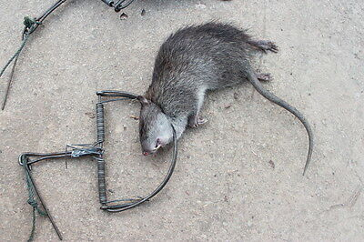 1 x Traps Mouse Rat Hunting STRONG Snap Catch Trap Trapping Catcher  Survival